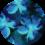 blue blossom print_