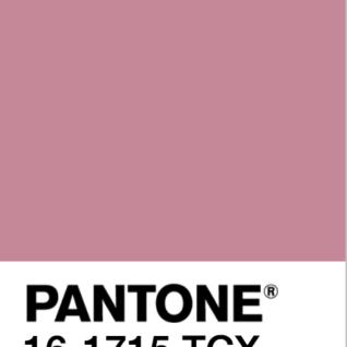 wild rose pantone